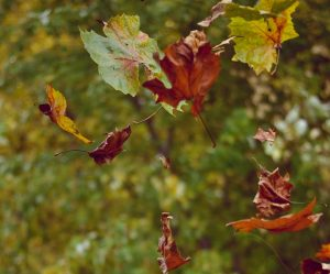 leaves as scattered thoughts